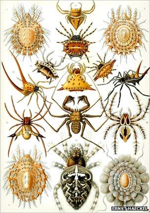 Kunstformen der Natur - spiders