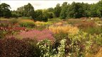 View of flowering plants in the Millennium Garden at Pensthorpe Nature Reserve