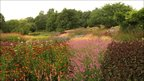 View of colourful flowers in the Millennium Garden at Pensthorpe Nature Reserve