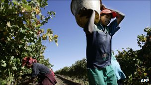 Report document abuse of South Africas vineyard workers.  (Photo Coutesy of BBC)