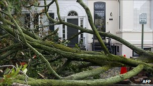 Fallen tree in Georgetown, Washington DC