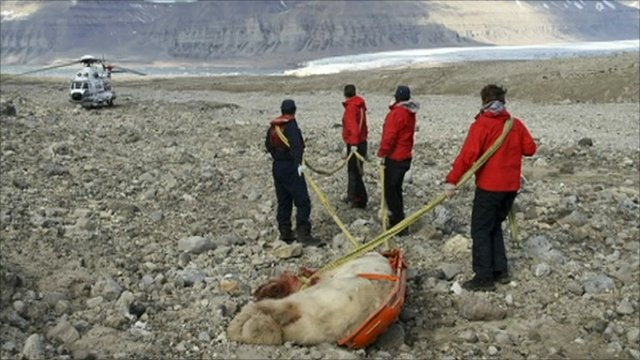 Expedition leaders with the dead polar bear