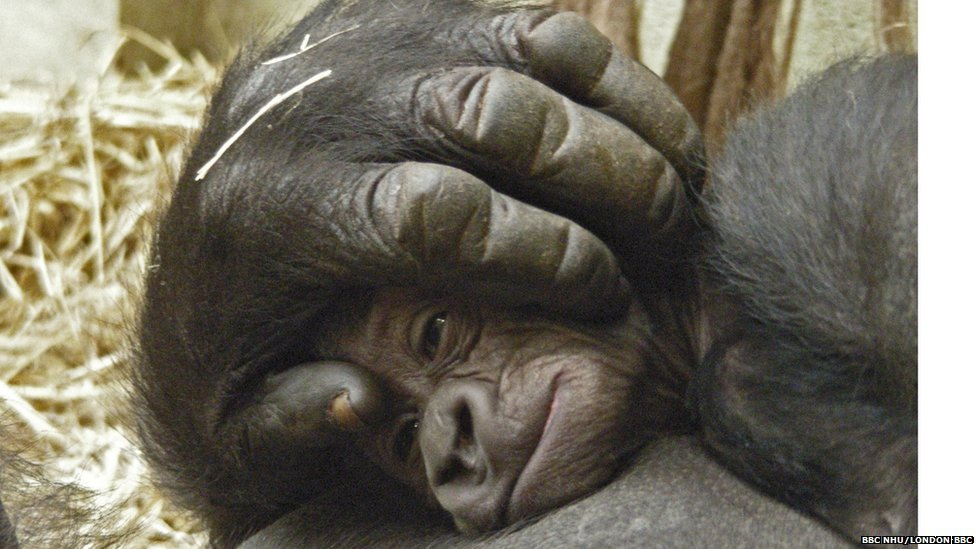 Pictures: baby endangered animals