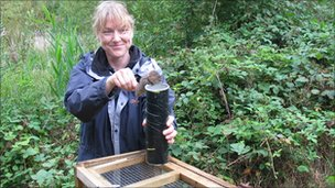 Jemma Gaskin, principal ecologist at Middlemarch Environmental Ltd, prepares to release a water vole