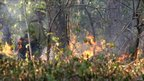 US forestry workers conduct a controlled burn to seal off a wildfire's path as it approaches a house near Bastrop, Texas. (6 Sept)