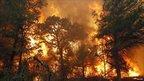 Flames roar near Bastrop State Park in Texas. Photo: 5 September 2011