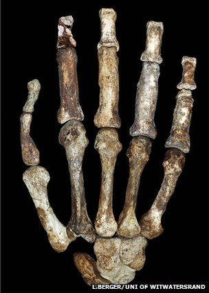 A. sediba hand (L.Berger/Uni of Witwatersrand)