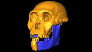 Skull reconstruction (L.Berger/Uni of Witwatersrand)