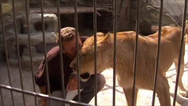 Oleksander Pylyshenko with a lioness Katya in a cage