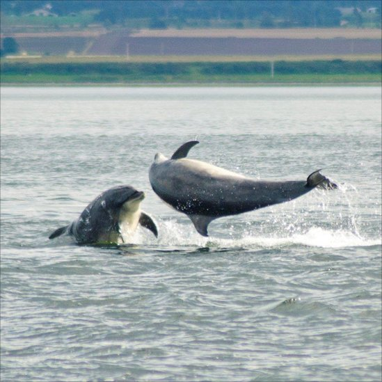 images of dolphins playing - photo #26