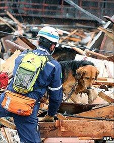 Rescue dog in Tohoku earthquake effort