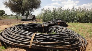 Drip irrigation tubing waiting to be laid