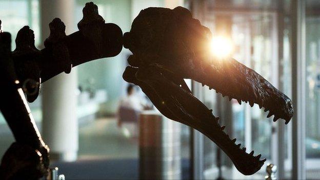 Dinosaur fossil in silhouette