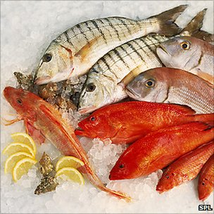 Red mullet, greay mullet and mackerel
