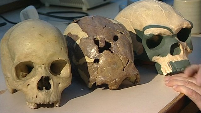 Modern (l), Stone Age (m), and ancient (r) African skulls