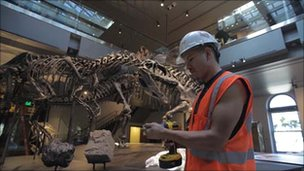 Contractor working on T. rex skeletons in LA