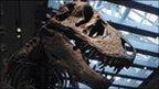 T. rex skeletons in LA