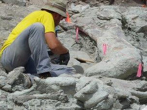 Dinosaur excavation in Utah