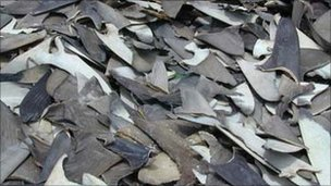 Pile of sharks' fins