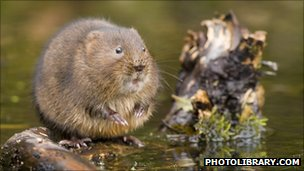 European water vole (c) 2010 photolibrary.com