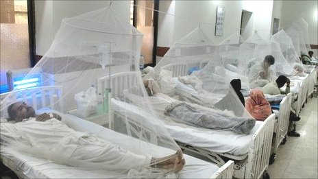 Mosquito nets cover beds of dengue patients at a Lahore hospital
