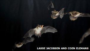 Aerial bat acrobatics