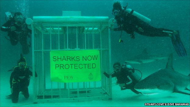 """Sharks now banned"" underwater photoshoot"