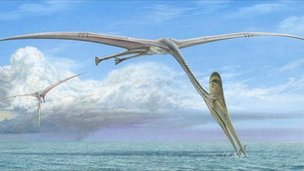 Artist's impression of a pterosaur (Image: John Sibbick)