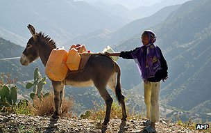 Eritrean girl with donkey