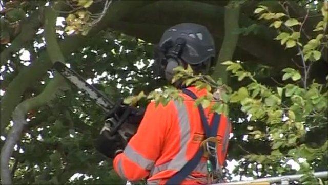 Worker begins felling tree at Irton near Scarborough