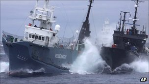 Anti-whaling group Sea Shepherd&#039;s ship the Bob Barker( right) and the Japanese whaling ship No. 3 Yushin Maru collide in the waters of Antarctica in Feb 2010