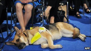Guide dog at Conservative conference