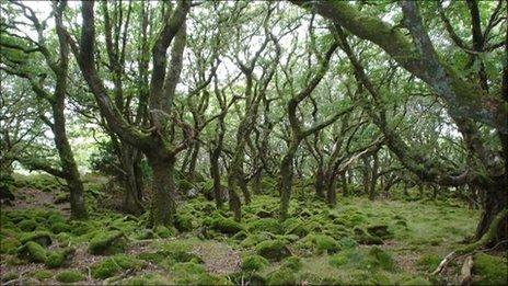 Tycanol woods