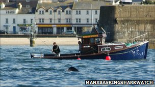Manx Basking Shark Watch