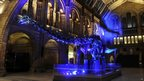 "Lighting up ""Dippy"" the diplodocus at the Natural History Museum in London"