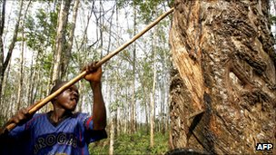 Former child soldier harvesting rubber in Liberia