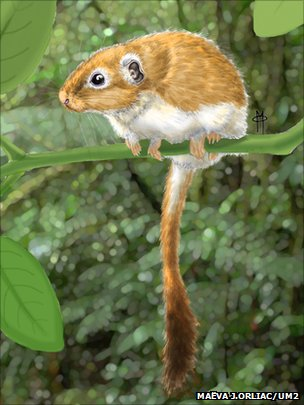 Life reconstruction of Canaanimys maquiensis, a rodent from the late middle Eocene of Peruvian Amazonia (By Maëva J.Orliac, University of Montpelier)