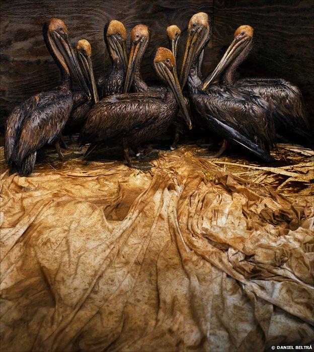 Birds (© Daniel Beltrá)