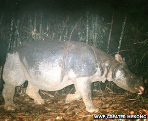 A Javan rhino is captured on camera in Vietnam&#039;s Cat Tien National Park (Image: WWF Greater Mekong)
