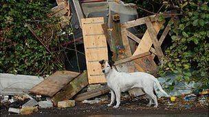 Dog next to debris at the Dale Farm travellers' site