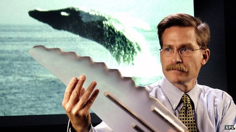 Researcher with model whale flipper