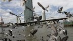 Pigeons fly over Chao Phraya river in Bangkok on Friday