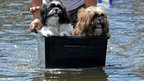 A man pushes dogs in a container through floodwaters in Bangkok on Friday