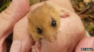 The Dormouse found by Di Hall and John Winterbottom