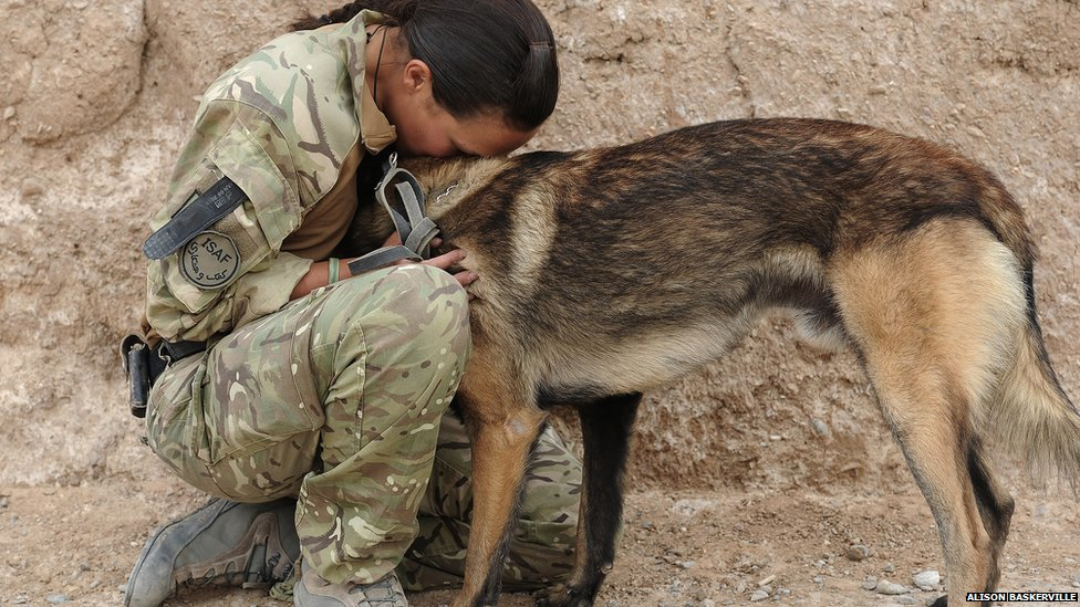 how to become a detection dog handler uk