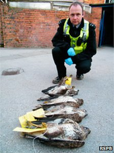policeman with four dead buzzards lined up