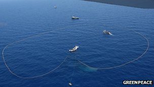 Purse seine fishing