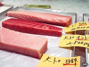Tuna on sale