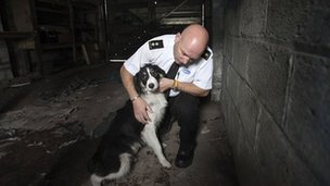 RSPCA inspector with a dog