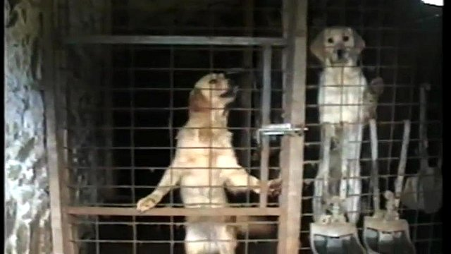 RSPCA image of dogs in cage